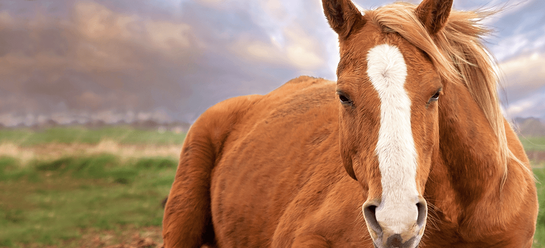the equine soul 2