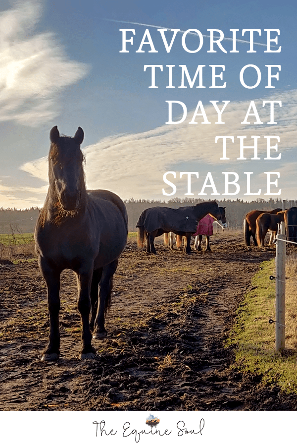 Favorite Time Of Day At The Stable
