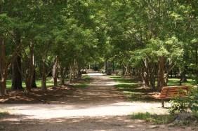 Enter the Arboretum