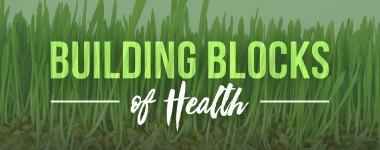 Enzymes II: Building Blocks of Health