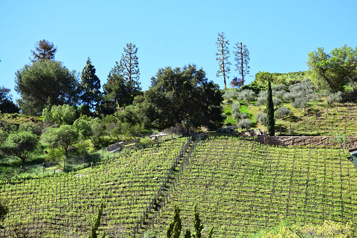 Palisades Hillside Winery