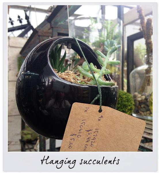 gsco succulents