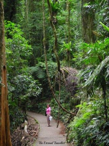 Gondwana rainforest, Dorrigo National Park, World Heritage Site, New South Wales