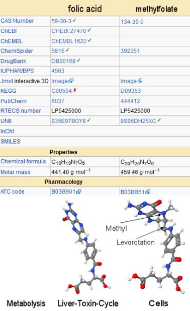 Folic Acid vs Folate