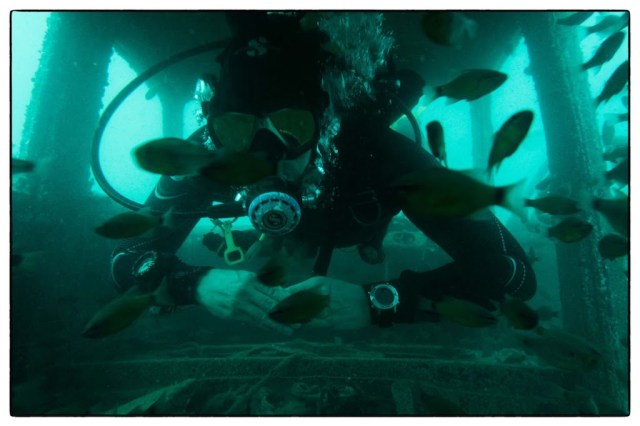 Diving in Puducherry