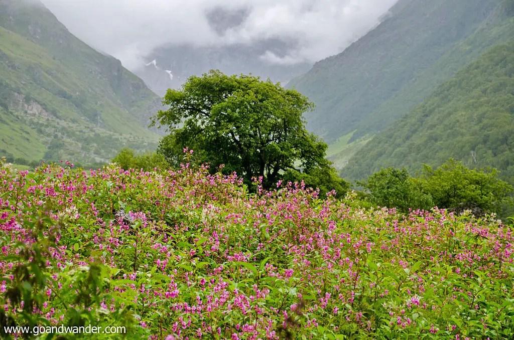 Valley of Flowers trek in the Himalayas