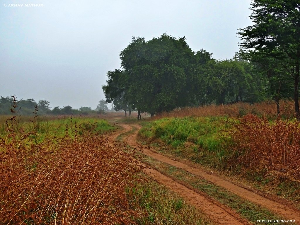 The grasslands of Panna National Park