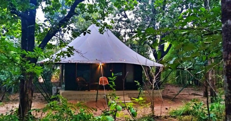 Pench Jungle Camp | A Luxurious Oasis in Pench National Park (MP, India)