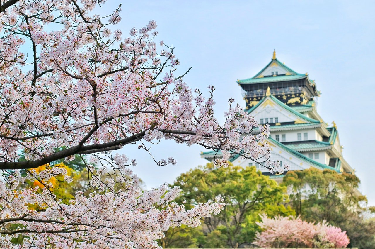 What You Need To Know Before Attending the Japanese Cherry Blossom Festival !