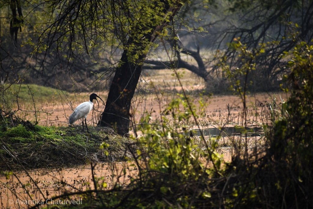 Birds at Keoladeo National Park