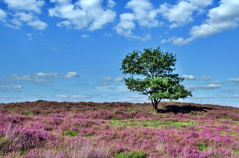 North Yorkshire Moors National Park in UK | theETLRblog