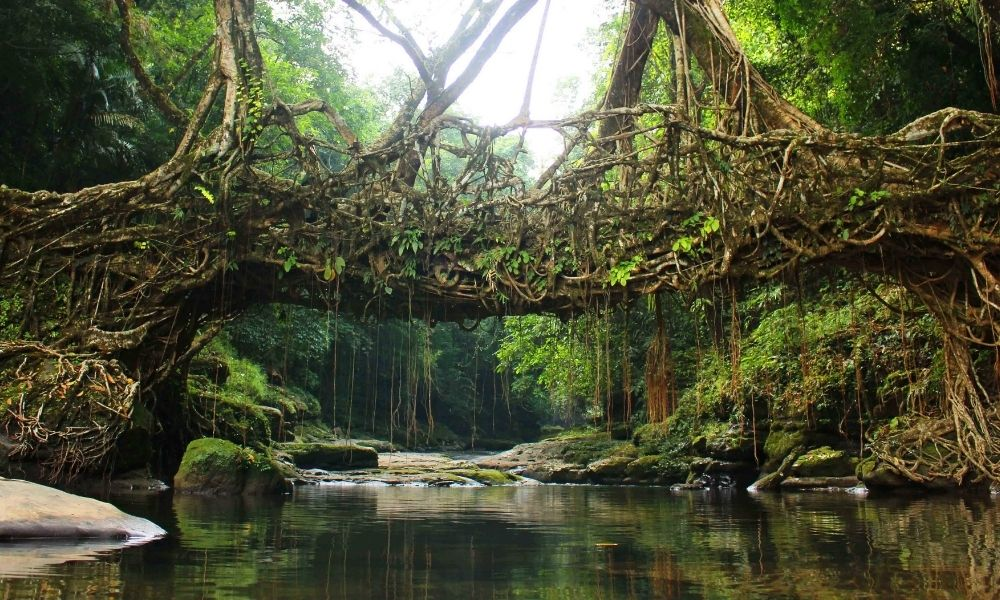 Offbeat Meghalaya – A glimpse into 5 unexplored destinations of North East India