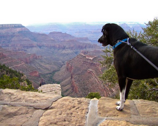 Abi Enjoying (or squirrel hunting in) the Grand Canyon