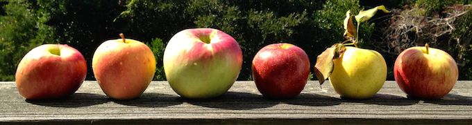 North Carolina apple varieties | www.theeverykitchen.com