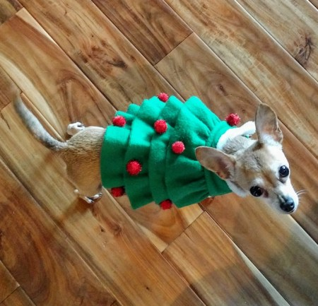 Christmas Tree Chihuahua | www.theeverykitchen.com