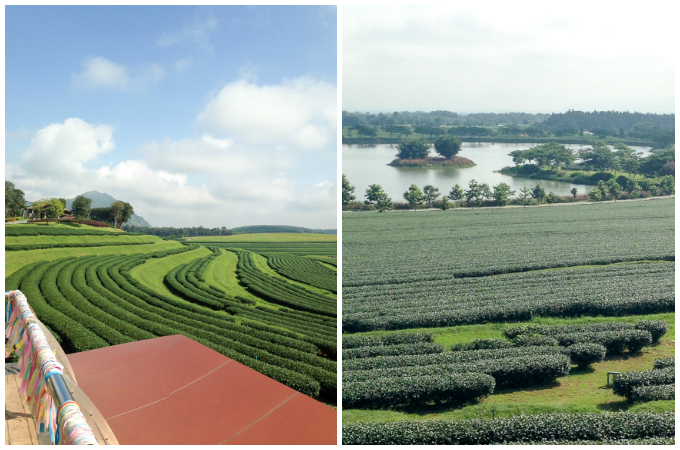 Singha Park Tea Plantation | www.theeverykitchen.com