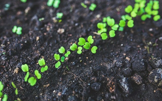 5 things you can still start from seed in a fall garden