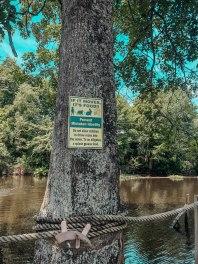 Swamp Tour38
