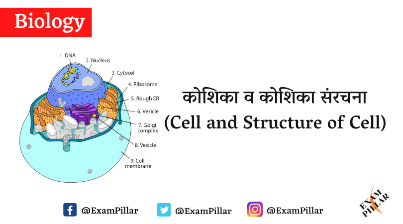 Cell and Structure of Cell