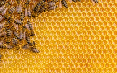 Honey's All the Buzz in South Dakota