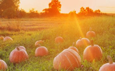 Golden West Offers Pumpkin Spice Internet in Honor of Fall!