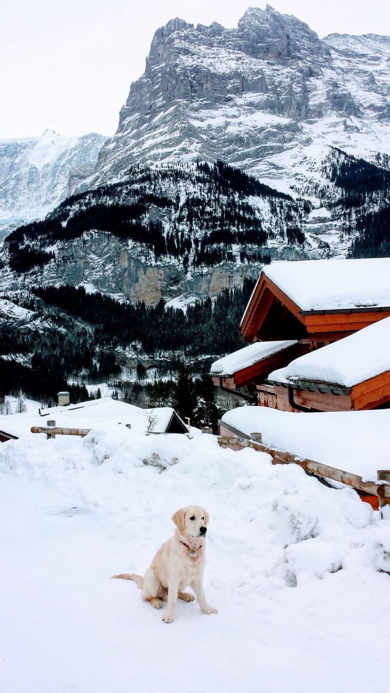 expat dog Swtzerland photo