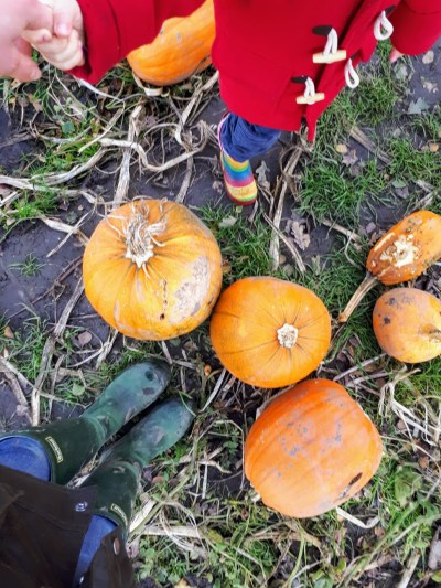 expat day out on a farm photo - pumpkin