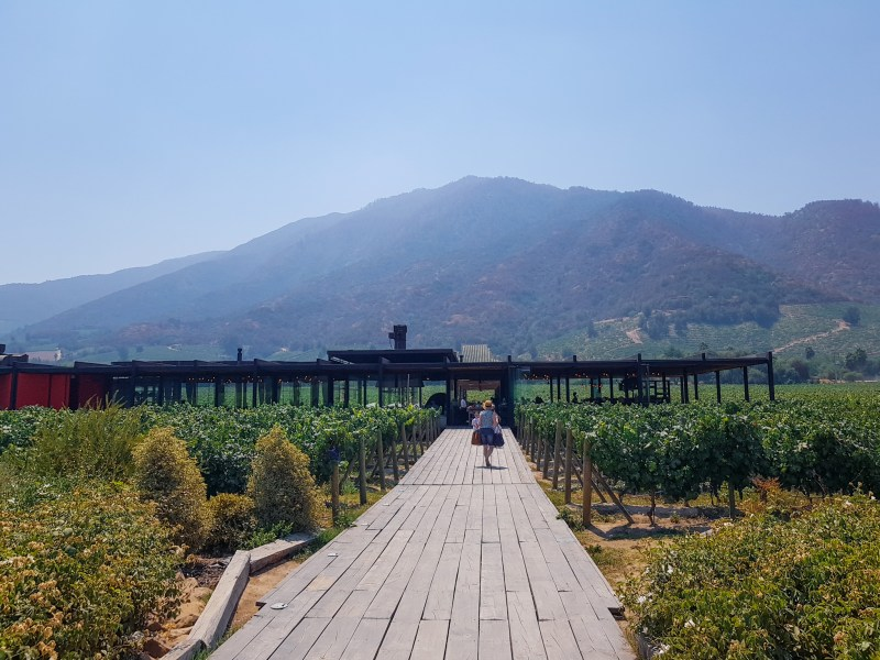 Santa Cruz wine region