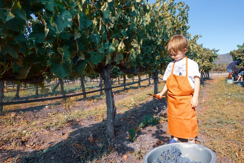great wine tour for children in Chile