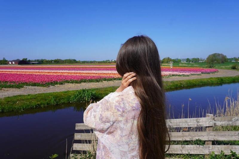 campos de tulipanes Amsterdam