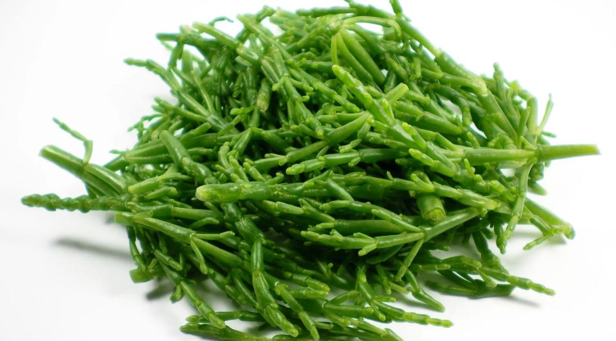 Samphire sales soar thanks to television food shows