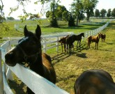 Derby-Experiences-private-horse-farm-tour-horse-farm