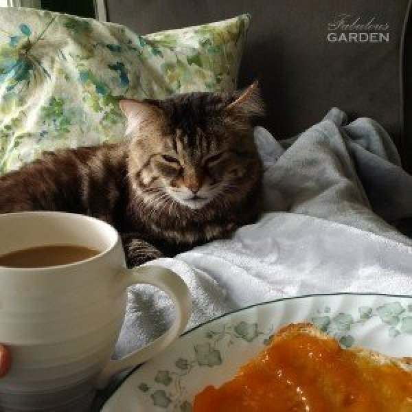 Perfect Saturday morning--peach jam on toast, hot coffee, warm cat