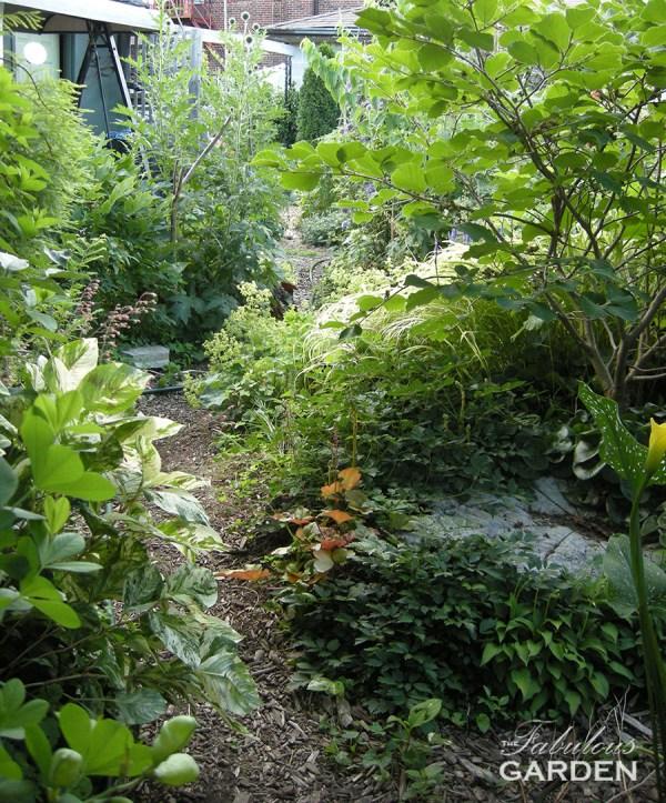 Jennifer's back garden