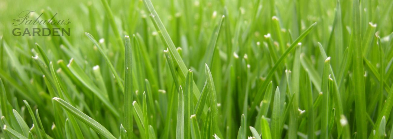 How do I take care of my lawn?