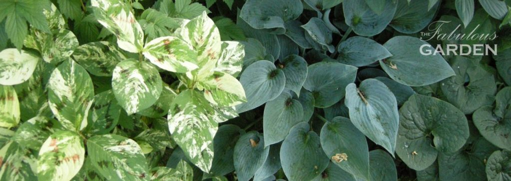 assortment of shade tolerant plants