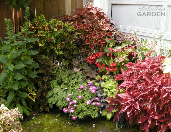 colorful group of plants, including several kinds of coleus