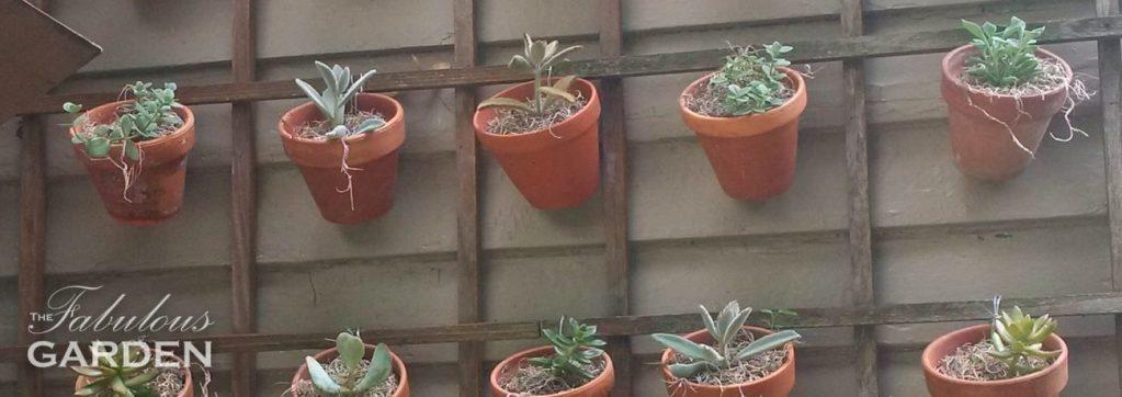 Terra cotta pots displaying succulents