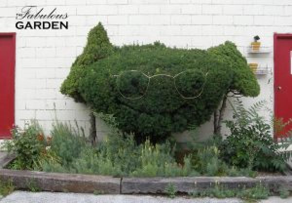 The gardener here has a sense of humour--glasses have been placed on this shrub to highlight its resemblance to a face