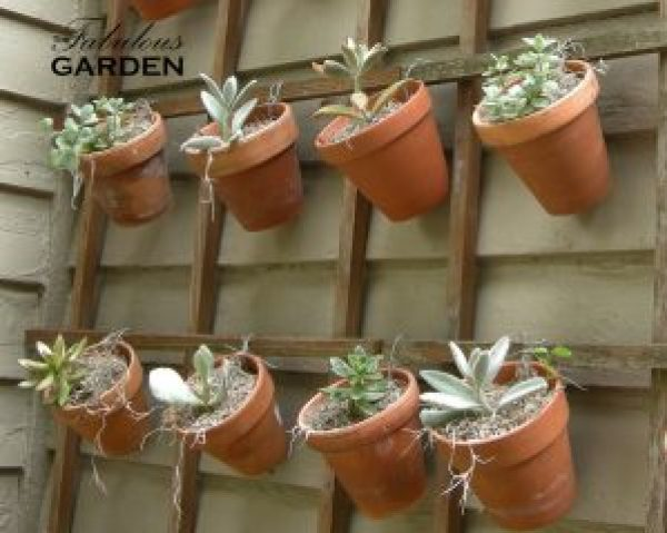 Succulents hang on pots indivually wired to this trellis