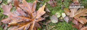 Fallen leaves mean it's time for fall garden cleanup