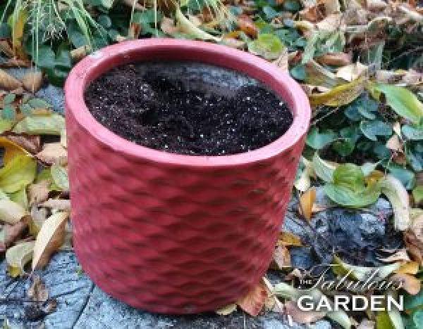 pot with soil