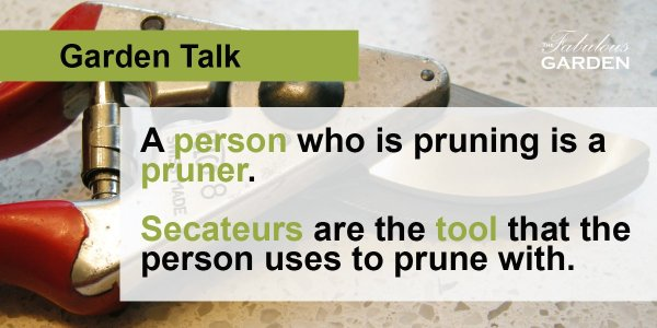 Secateurs vs pruners