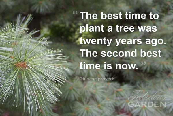 The best time to plant a tree was twenty years ago. The second best time is now