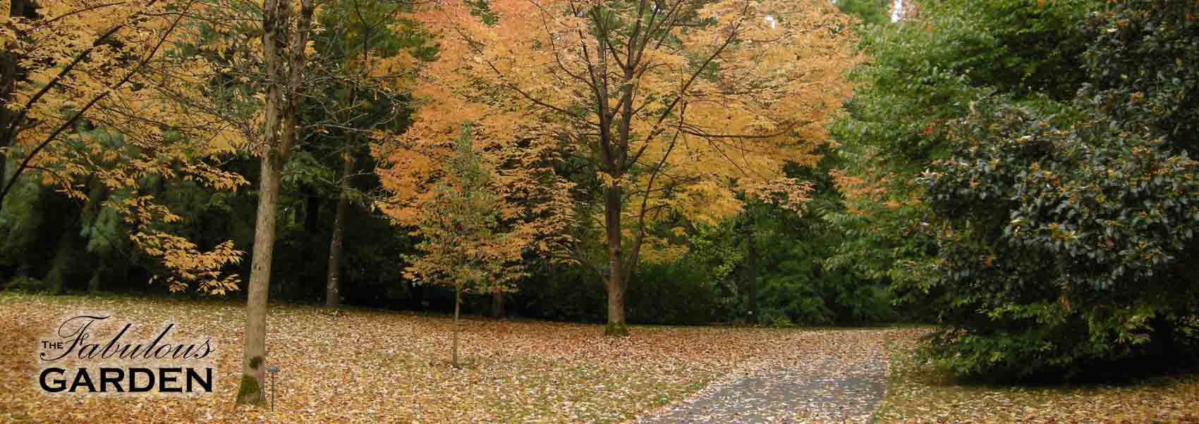 Fuss less in the fall - The Fabulous Garden