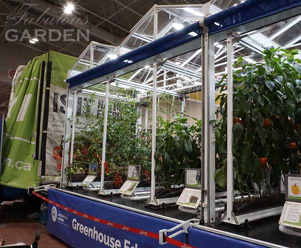 Lessons for home gardeners from greenhouse tomato growers
