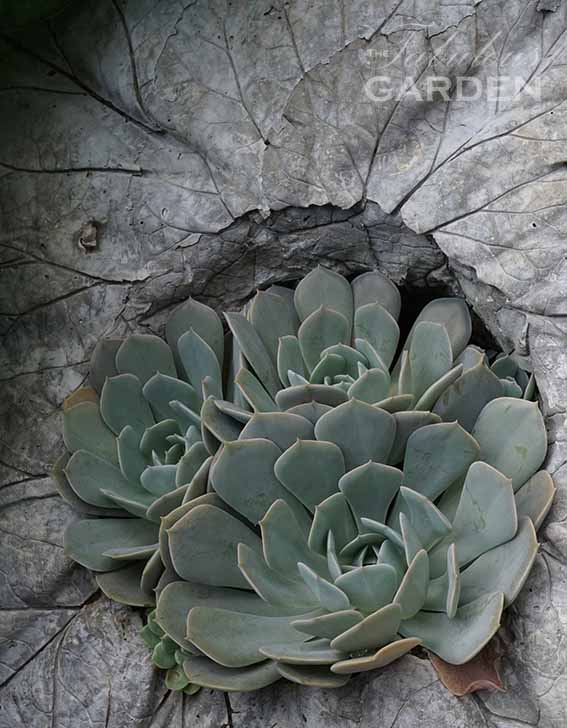 How to multiply succulent plants by rooting pieces of them