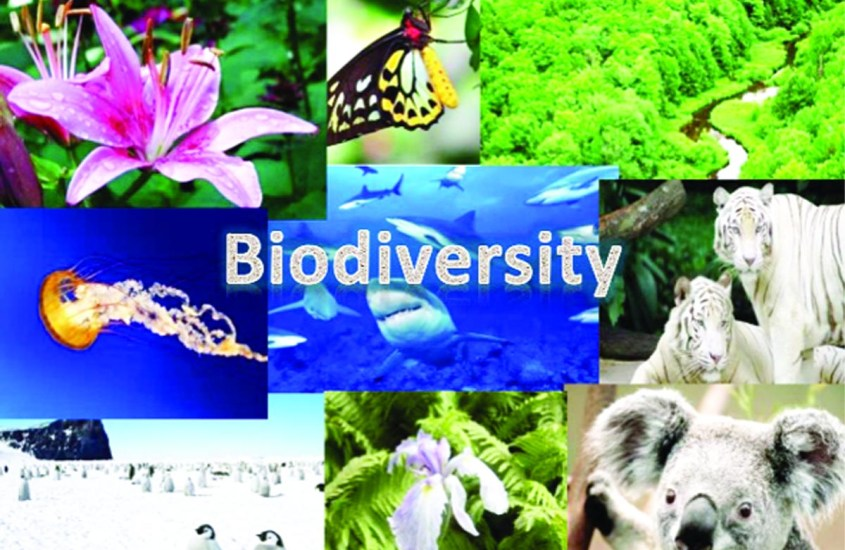 threats-to-biodiversity