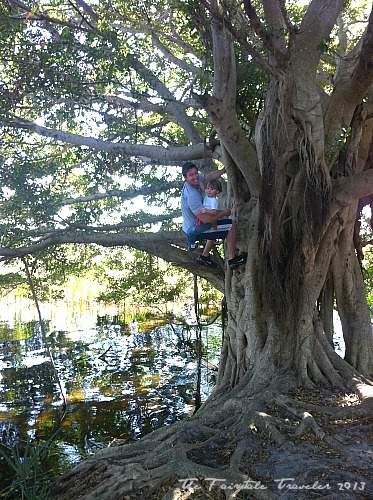 Banyan Tree in Tarpon Springs