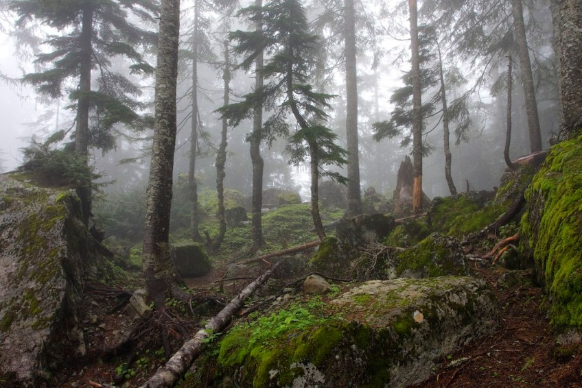 Washington state marijuana legalization weed tourism